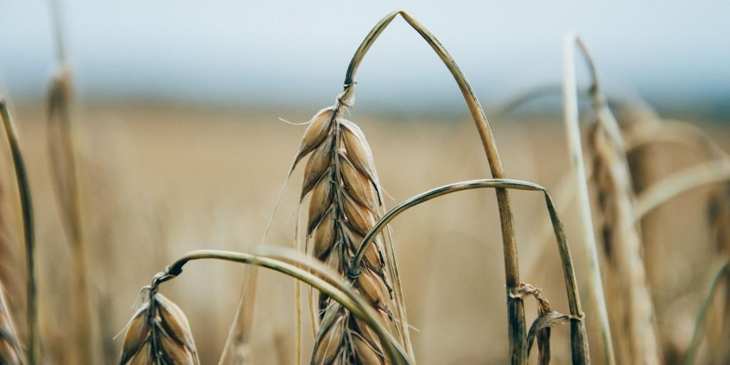 Unsere Ernährung beeinflusst die Umwelt – oder – Noch ein Argument für den Vegetarismus